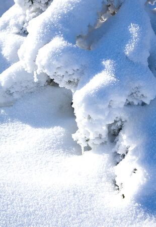 twiggy: Small plants covered with snow and frost