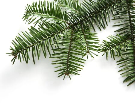 fir twig: Fir twig isolated on white background Stock Photo