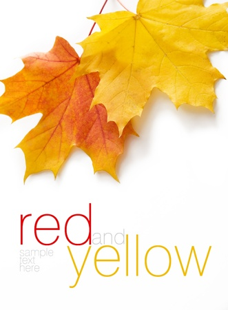 Autumn orange and yellow leaves  Space for text or logo isolated on white   Stock Photo - 15858773