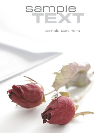 Dried roses isolated on white background  Stock Photo - 16685311