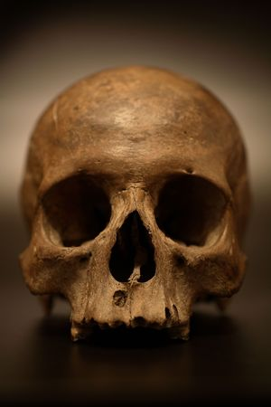 decomposition: Old skull Stock Photo