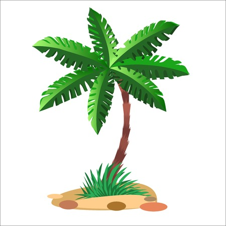 dates fruit: Green palm tree on a sandy soil and a neutral background