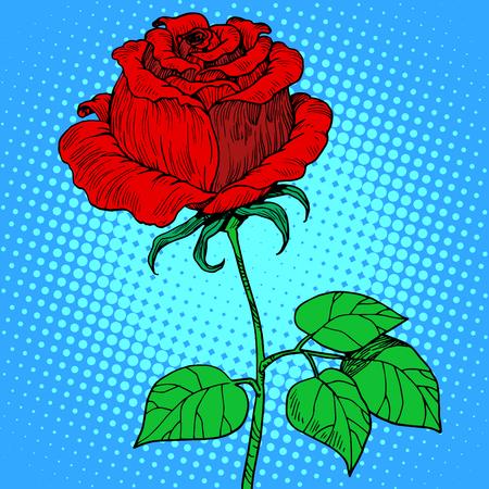 Rose rode bloem pop art retro-stijl Stockfoto - 47522673