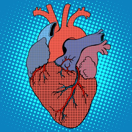 human heart: Anatomía del corazón del estilo pop art retro humano. Medicina y salud del sistema circulatorio Vectores