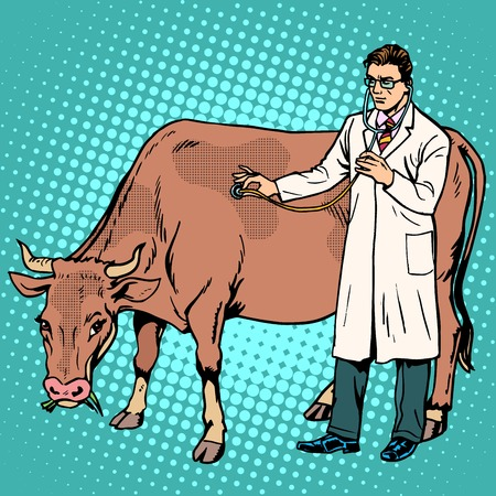 Veterinarian treats a cow farm animal medicine pop art retro style. Agriculture and health allowed. Professionals at work