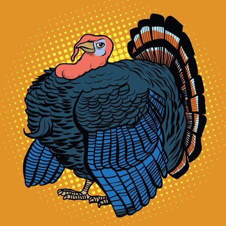 gobbler: Poultry Turkey, realistic pop art retro vector illustration. Farm animal. Thanksgiving day