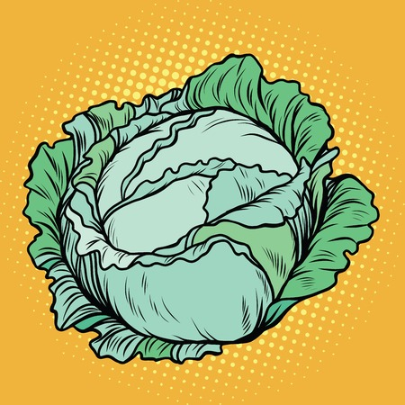 art product: Cabbage, healthy vegetarian food, farm product, pop art retro vector illustration Illustration