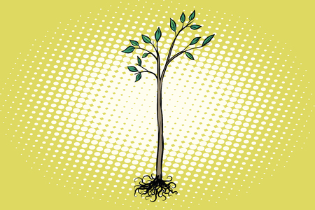 tree seedling with green leaves Illustration
