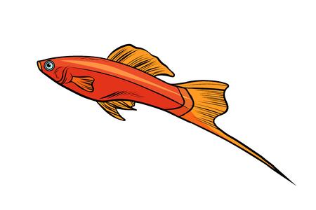 Poisson d'aquarium isolé en épée Banque d'images - 92628859