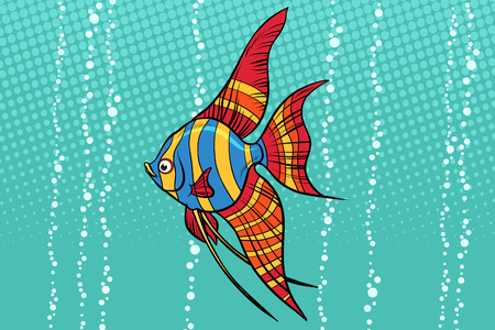 Freshwater angelfish aquarium fish. Pop art retro vector illustration.