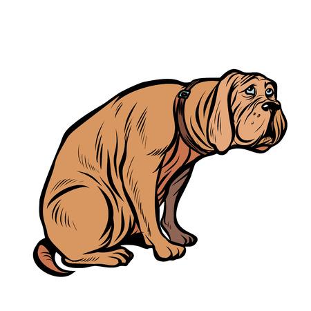 perro culpable, mascota divertida. Pop art retro vector ilustración vintage kitsch