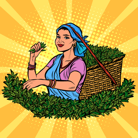 Indian or Sri Lanka tea picker. Traditional harvest. woman in national dress. Pop art retro vector illustration kitsch vintage