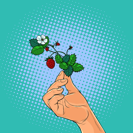 forest strawberry twig in the hands. Pop art retro vector illustration vintage kitsch Illustration