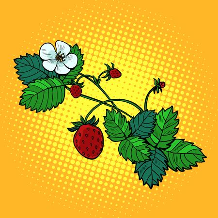 forest strawberry twig. Pop art retro vector illustration vintage kitsch