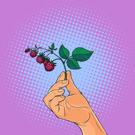 brindille de framboise à la main. cueillette de baies sauvages. Pop art rétro vector illustration kitsch vintage
