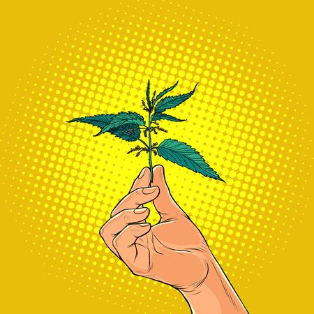 nettle, green burning plant in the hands. Pop art retro vector illustration vintage kitsch