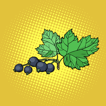 sprig of black currant. Pop art retro vector illustration vintage kitsch