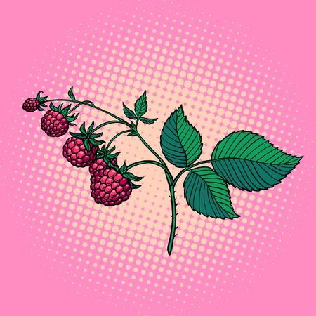 raspberry twig. wild berry. Pop art retro vector illustration vintage kitsch Иллюстрация