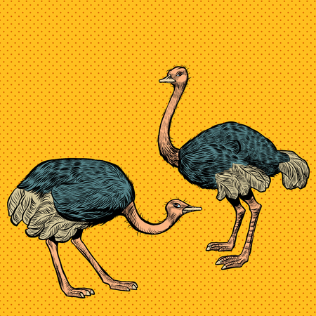 African ostriches, wild and farm animals. Pop art retro vector illustration vintage kitsch Illustration