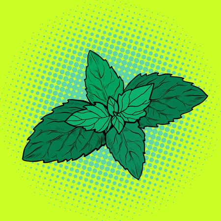 foglia di menta, pianta aromatica. Pop art retrò illustrazione vettoriale vintage kitsch Vettoriali