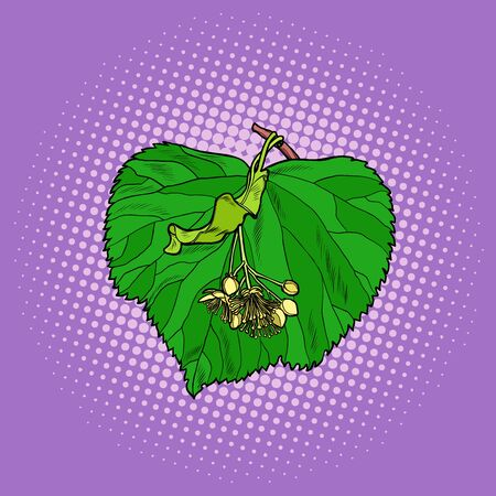 Linden tree leaf. Pop art retro vector illustration drawing Illustration