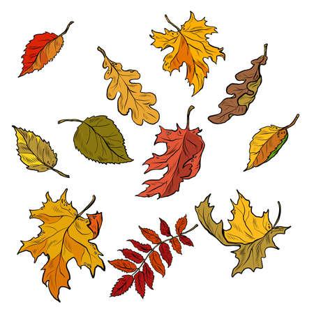 Autumn leaves of trees, seasonal fallen crown. Set Иллюстрация