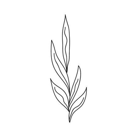 Vector Illustration Isolated Leaves Hand Drawn 向量圖像