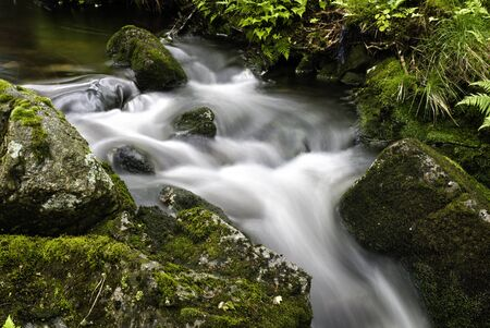 trees photography: A small forest stream at Dalsnuten, Norway Stock Photo