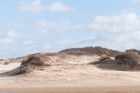 dutch: Dutch dunes Stock Photo