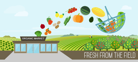 farmer market: Organic market concept. Vector illustration of a store with a basket of organic vegetables and fruits. Delivery of natural products from the garden straight to the shop. Illustration