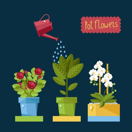 house plants: Watering house plants from a watering can.