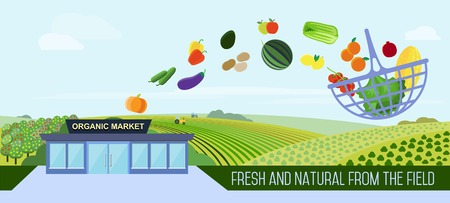 basket: Organic market concept. Illustration of a store with a basket of organic vegetables and fruits. Delivery of natural products from the garden straight to the shop.