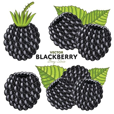 berry fruit: Blackberry with Leaves, Vector. Isolated on White Background. For design packing juice, yogurt and others. Illustration