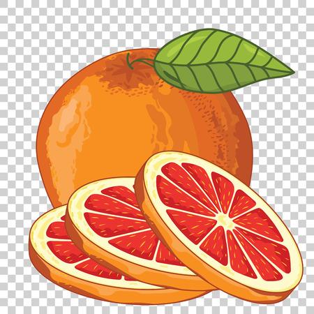 toronja: Pomelo aislado, vector. Para el dise�o de embalaje zumo, yogur y otros. Vectores