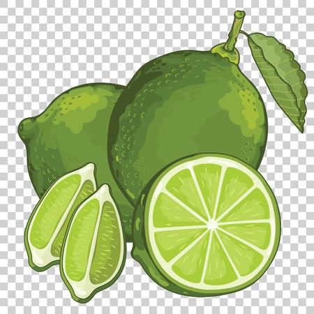 Kalk isoliert, Vektor. Obst-Serie. Für Design-Verpackung Saft, Joghurt und andere. Vektorgrafik
