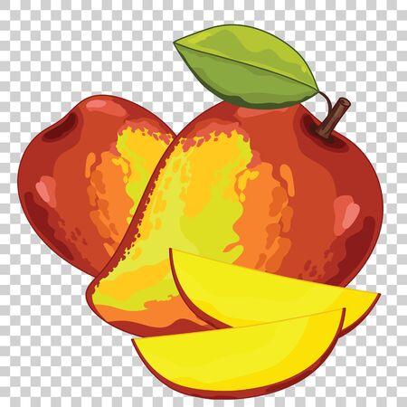 mango slice: Mango Isolated, Vector. For design packing juice, yogurt and others.