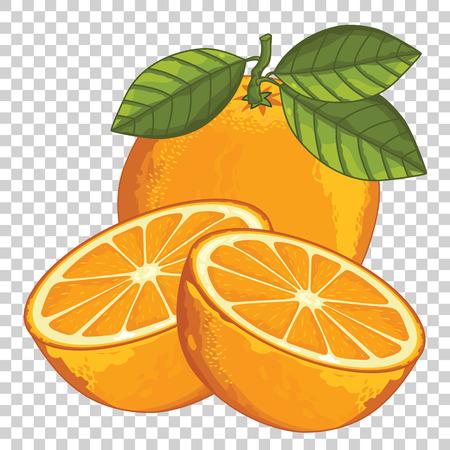 sweet orange: Orange Isolated, Vector. For design packing juice, yogurt and others.