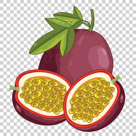 Passion Fruit Isolated, Vector. For design packing juice, yogurt and others. Illustration