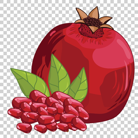 Pomegranate Isolated, Vector. For design packing juice, yogurt and others.