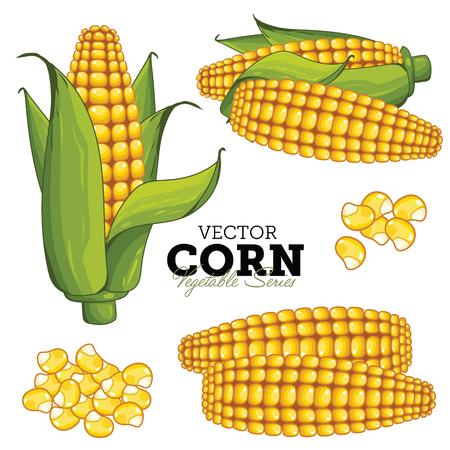 mazorca de maiz: Maíz aislado en el fondo blanco. Vector Serie vegetal. Vectores