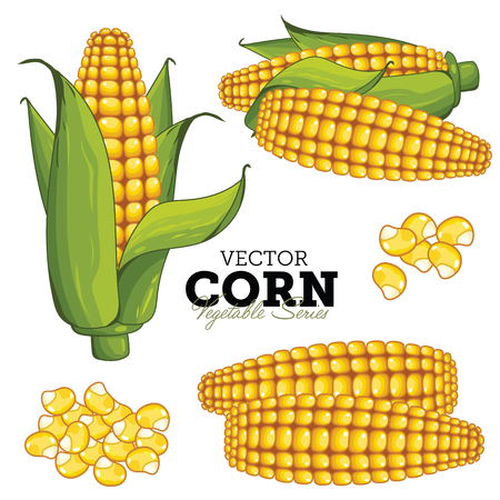 Corn Isolated on White Background. Vector Vegetable Series.