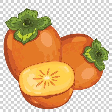 persimmon: Persimmon Isolated, Vector. For design packing juice, yogurt and others. Illustration