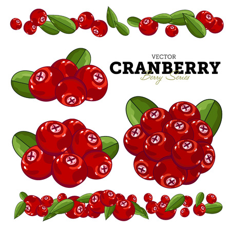 cranberry illustration: Set Cranberry Compositions, Cranberry Leaves, Cranberry Vector, Cranberry illustration of Cranberry. Cranberry Isolated on White Background. Bunch of Juicy Cranberry Berries. Illustration