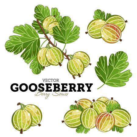 gooseberry: Set Gooseberry Compositions, Gooseberry Leaves, Gooseberry Vector, Cartoon illustration of Gooseberry. Gooseberry Isolated on White Background. Bunch of Gooseberry Berries.