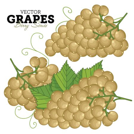 cluster: Grape Bunch, Grape Leaves, Grape Vector, Cartoon illustration of Grape. Grape Isolated on White Background. Set of Juicy Grapes Cluster.