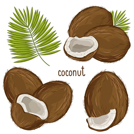 coconut palm: Coconut Isolated