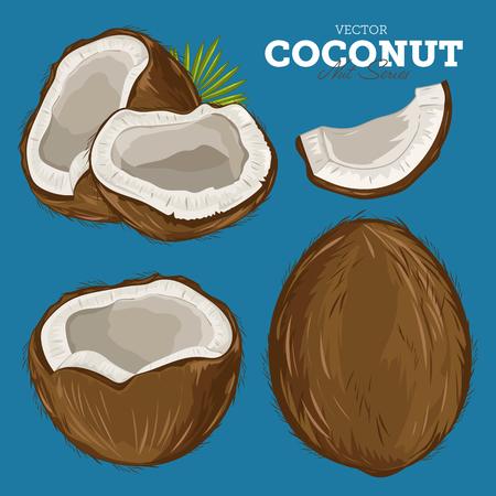 cocotier: Composition de noix de coco sur fond blanc Illustration