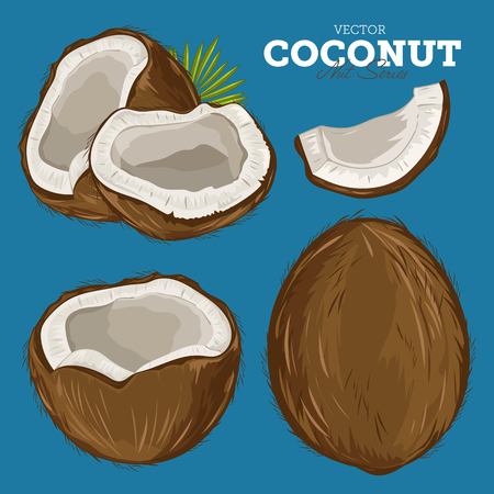 coconut leaves: Composition of Coconut on white background