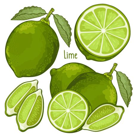lime: Composition of Lime on white background
