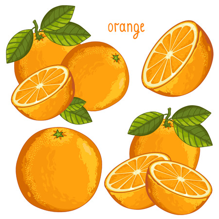 background orange: Composition of Orange on white background Illustration